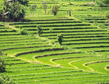 Bali Aga Trek