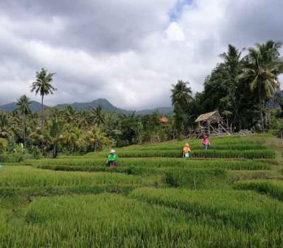 Bali Kintamani Sunrise and Lemukih Waterfall Trekking Tours