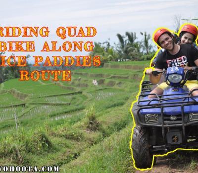 Quad Bike Bali Tour with Rice Paddies Tracks