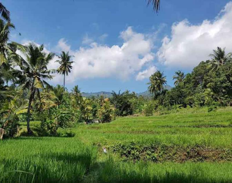 Bali Sunrise and Trekking Tours