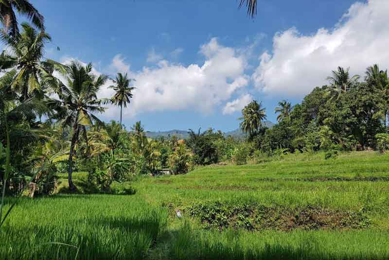 Bali Sunrise and Trekking Tours